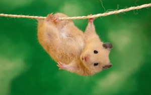 mouse-hanging-on-a-rope-big